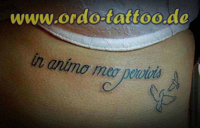 Brust Tattoo Latein Schriftzug mit zwei Tauben