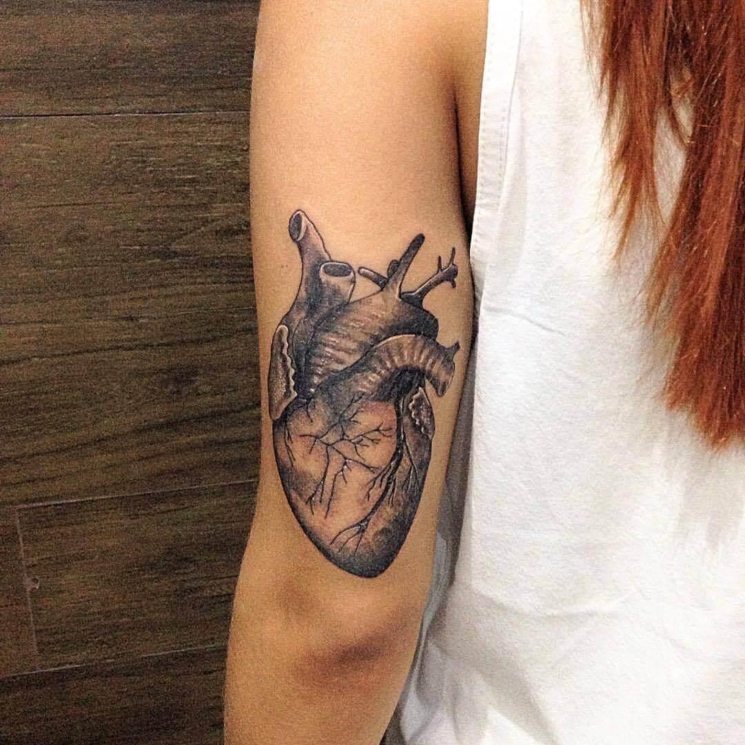 Anatomisches Herz