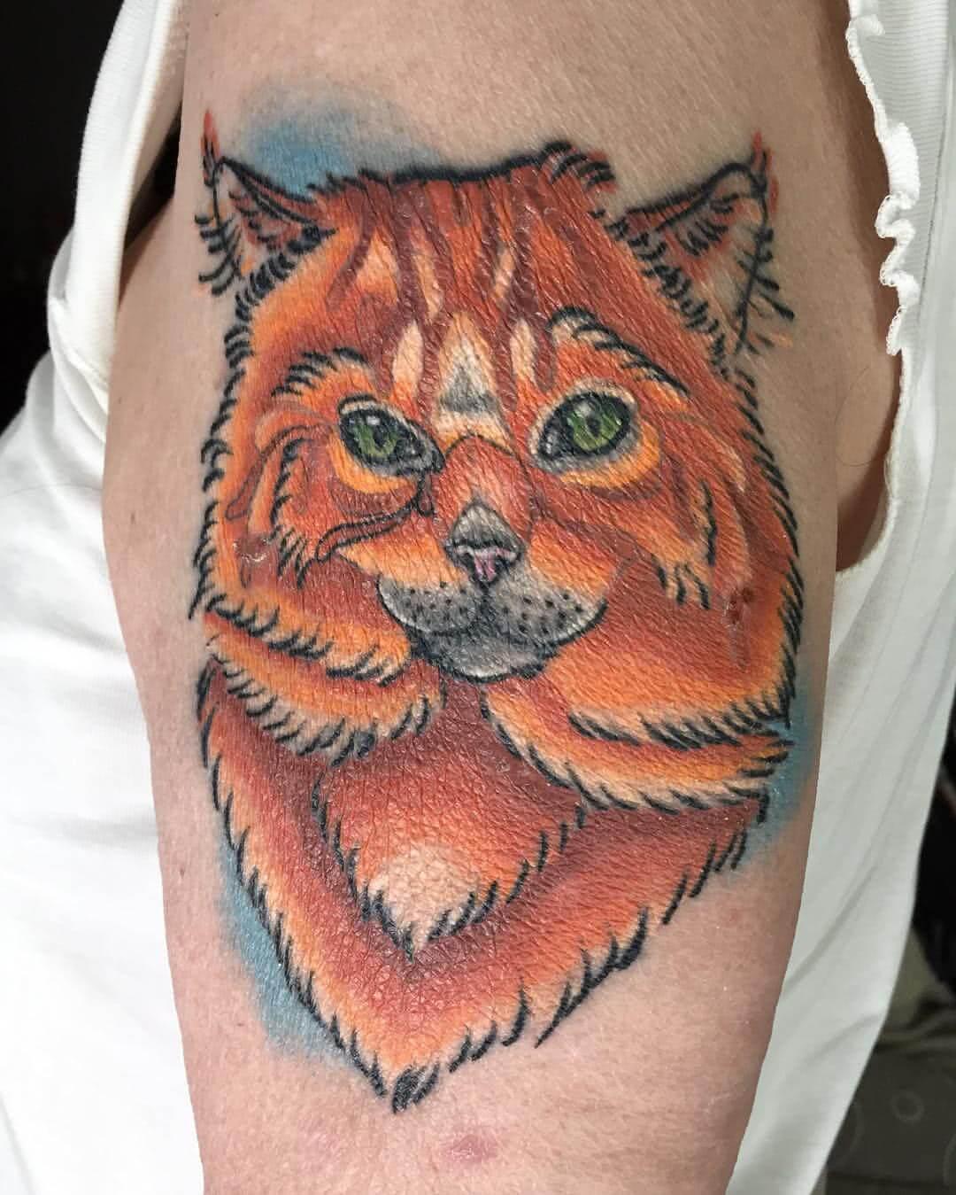 Katze auf dem Oberarm
