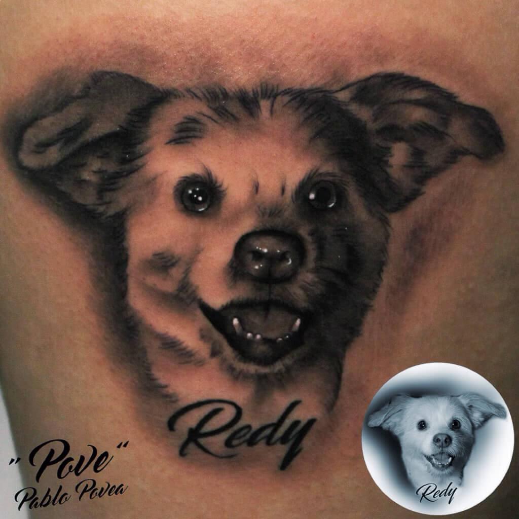Portrait Hund Kopf